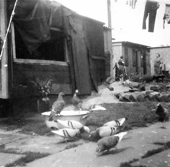 Two women in the back garden of a prefab, pigeons in the foregrounds. Stewart Street, London E14